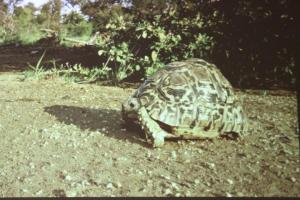 Tortoise from Daren Riedle's presentation