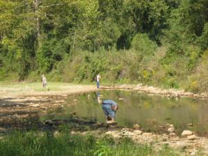 Collecting Bee Creek