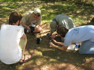 Photographing the groundsnake